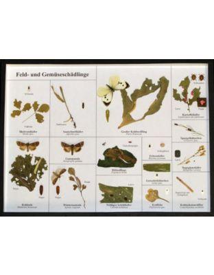 Schaukasten: Feld- und Gemüseschädlinge