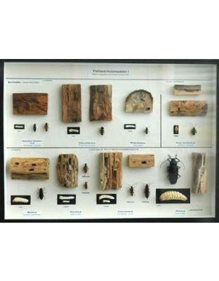 Schaukasten: Freilandholzinsekten I
