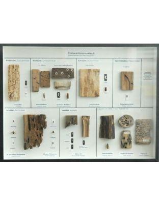 Schaukasten: Freilandholzinsekten II