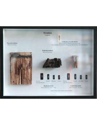 Schaukasten: Termiten