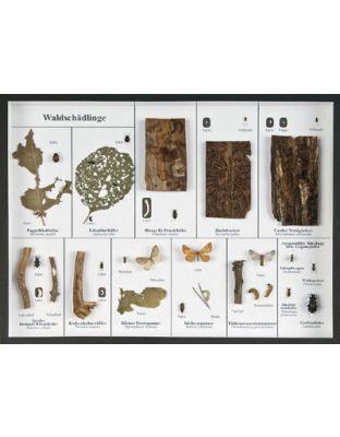 Schaukasten: Waldschädlinge