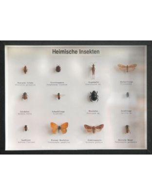 Schaukasten: Heimische Insekten - Ordnungen